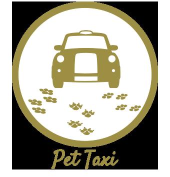 Pet Taxi Icon